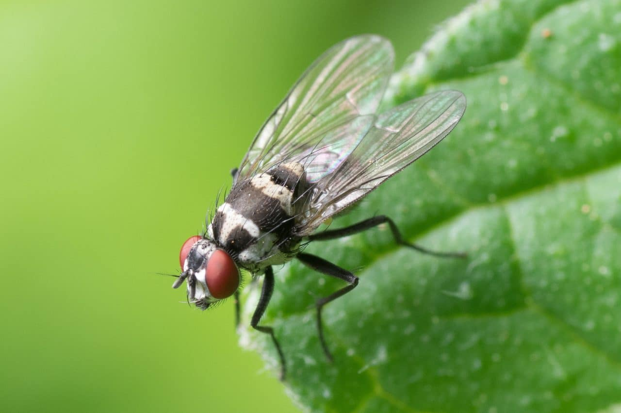 Close up of a fly on a leaf